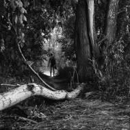 Benyamin Reich aus der Serie Tiergarten Ed. 1/1, 2018