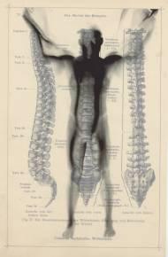 Robert Flynt spinal  unique inkjet print on vellum/ found book page 25cm*16cm, 2010